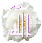 https://lifeforislam.files.wordpress.com/2011/03/allah-rose.jpg?w=175